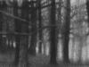 edge_of_the_woods_2012_elaine_green