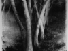 oregon_forest_black_leaves_2009_elaine_green