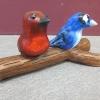 dana_birds