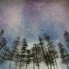 atraia_trees